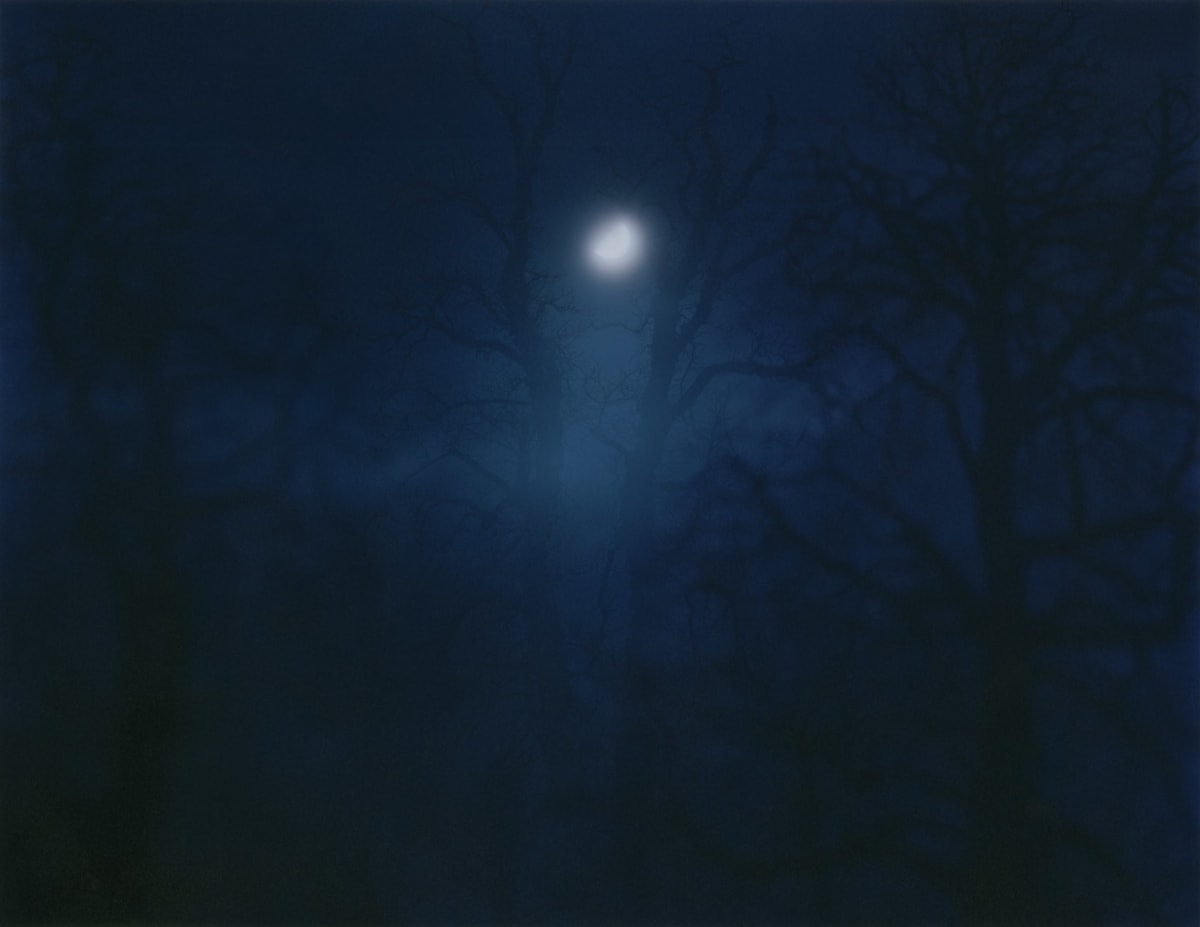 Nicholas Hughes In Darkness Visible [Verse I] no. 12, 2007 Chromogenic photograph 81.3 x 101.6 cm 32 x 40 in Edition of 5