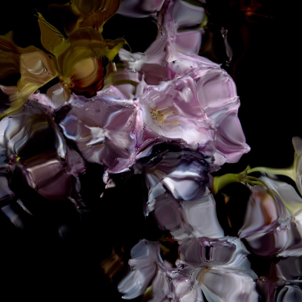 Alexander James Hamilton Floral Study [0448], 2012 Chromogenic photograph, mounted to polished aluminium with a/r acrylic face (Diasec) 11 3/4 x 11 3/4 in 30 x 30 cm Edition of 5