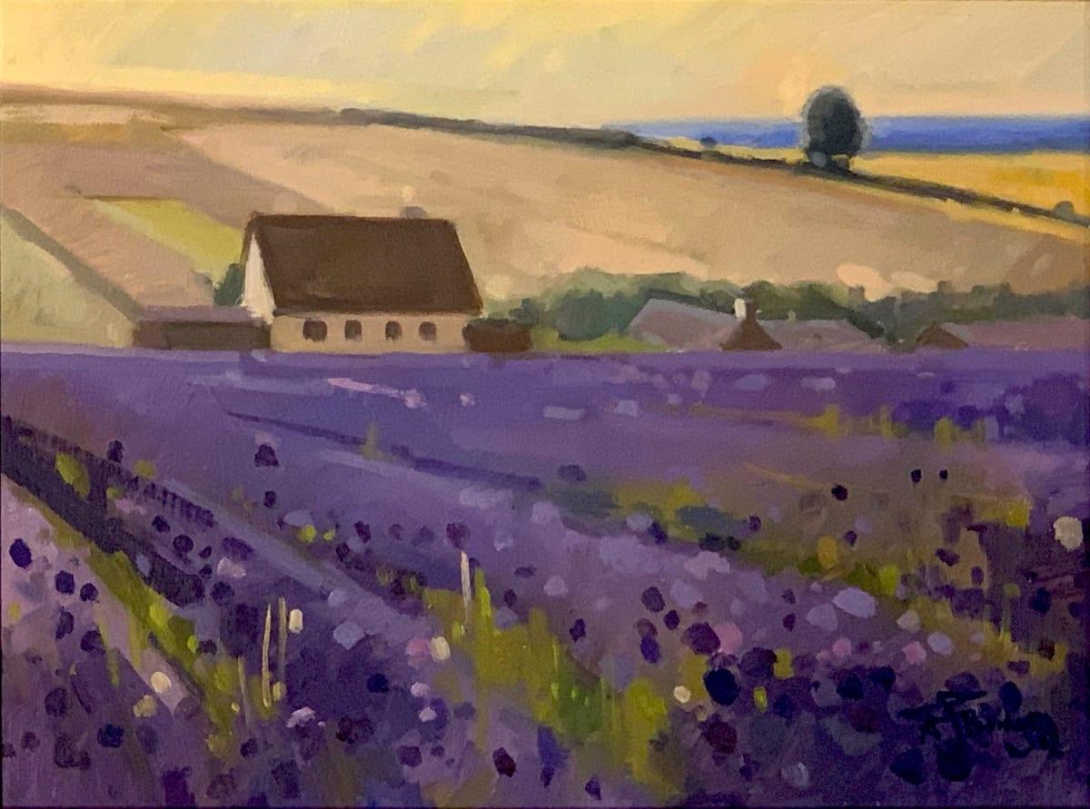 Antony Bridge, Cotswold Lavender, 2012