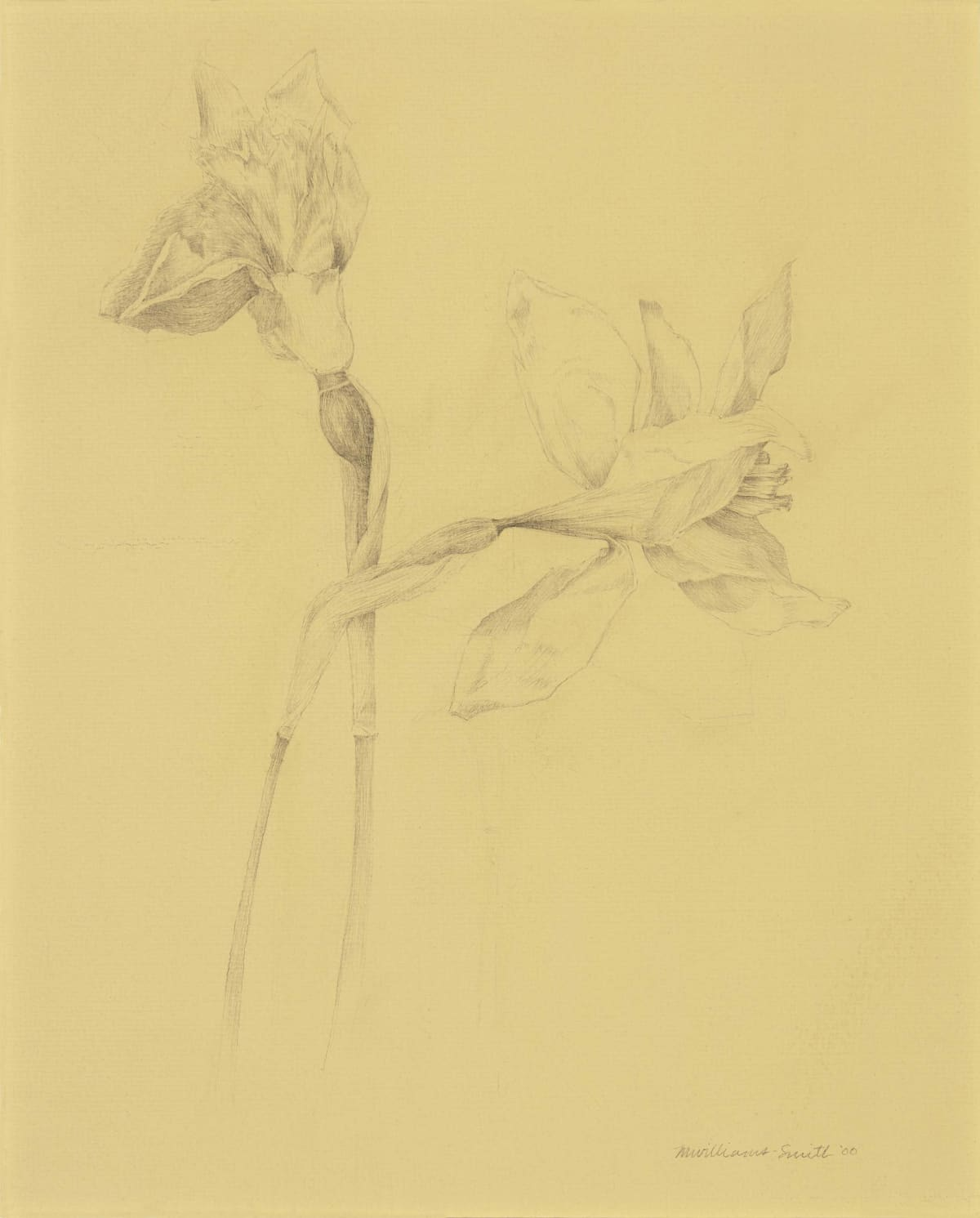 Marjorie Williams-Smith Untitled , 2000 Silverpoint on Tinted Gesso 10 1/8 x 9 3/4
