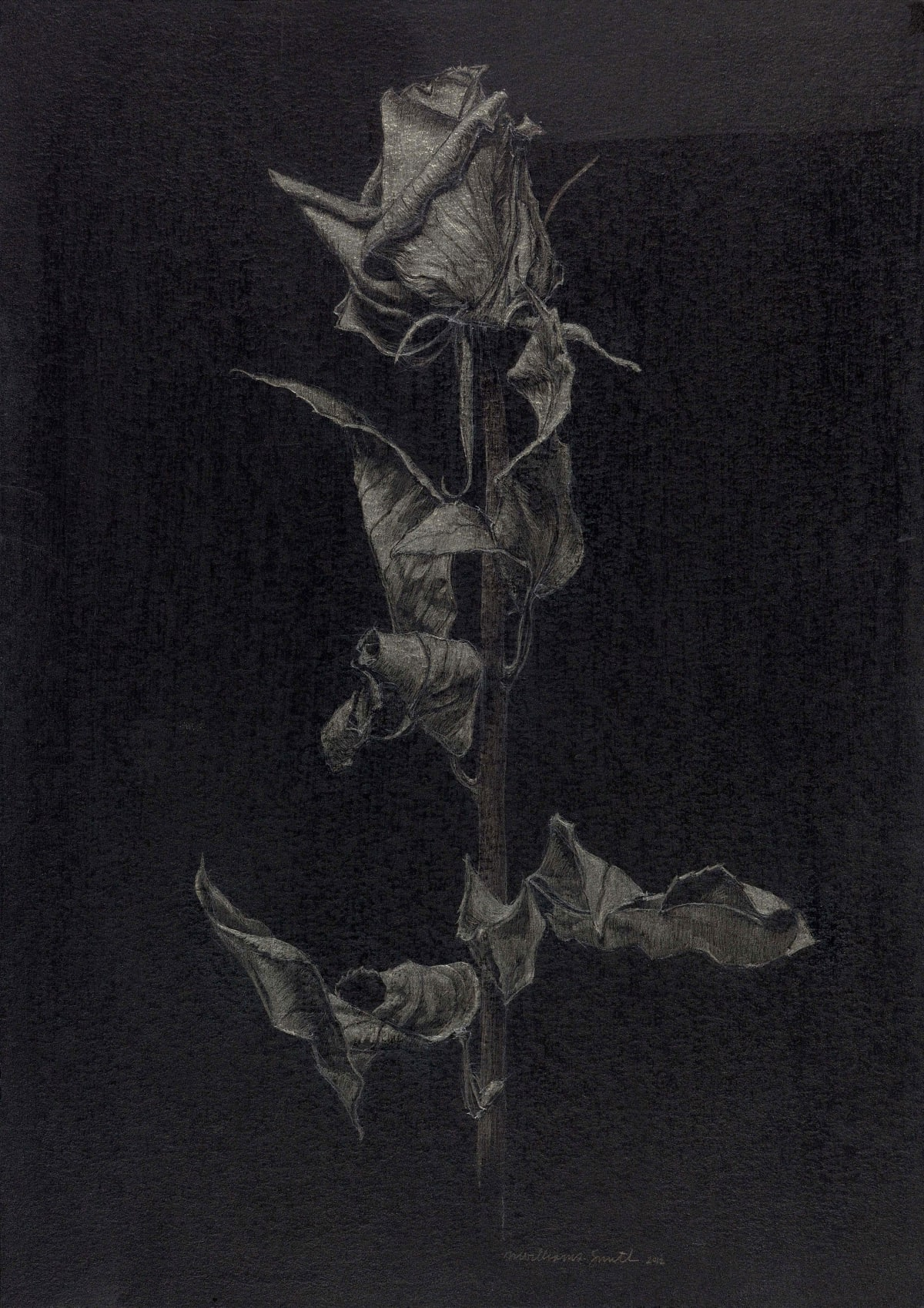 Marjorie Williams-Smith Clairvoyant , 2012 Silverpoint on Black Acrylic Gesso 11 3/16 x 8