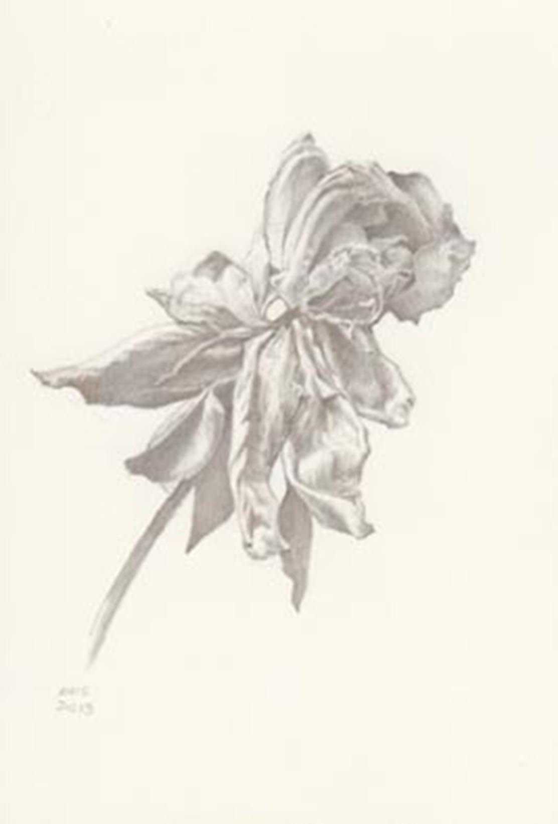 Marjorie Williams-Smith Rose Motion RIght Silverpoint 5 3/8 x 3 15/16