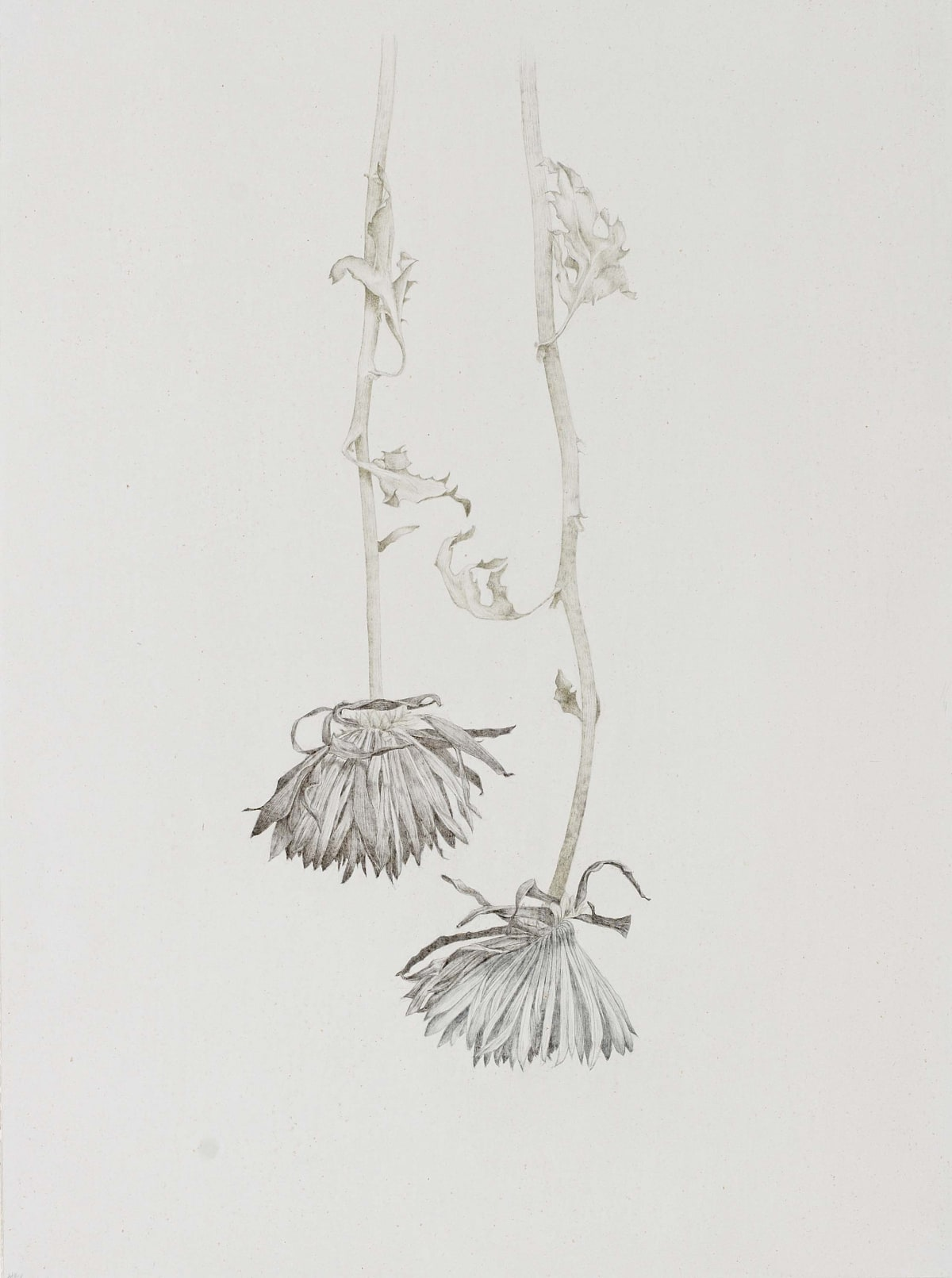 "Marjorie Williams-Smith Siblings , 2007 Silverpoint and copperpoint 14"" x 10 ½"""
