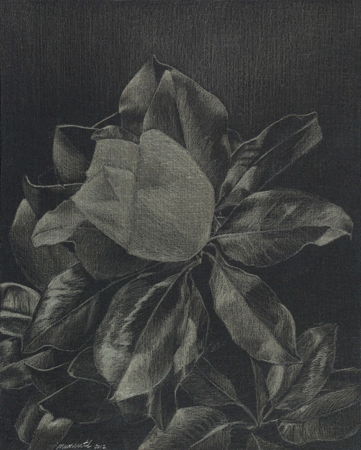 "Marjorie Williams-Smith Magnolia, 2012 Silverpoint on black acrylic gesso 5 1/8"" x 4 1/8"""
