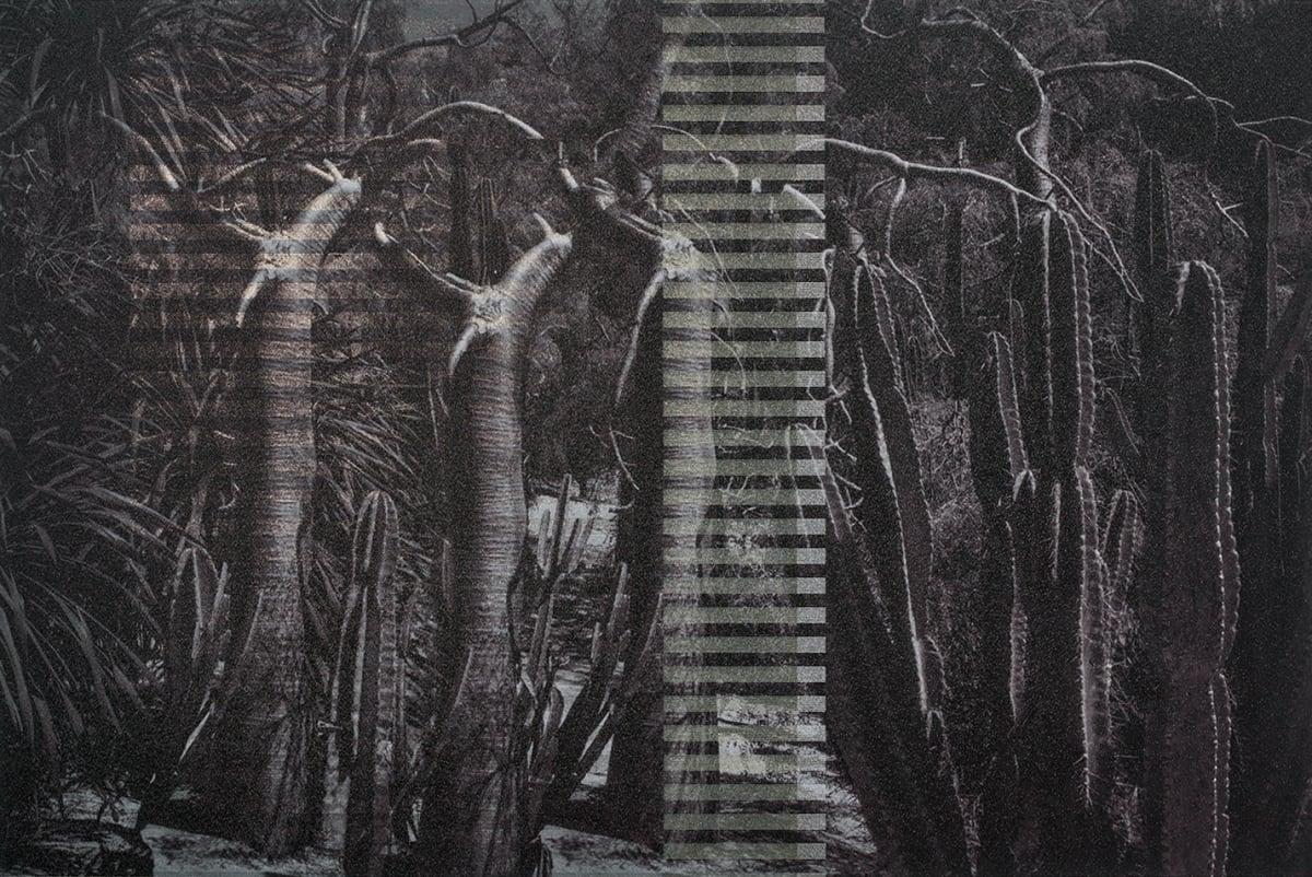 Gerald van der Kaap, PERMANENT WAVE (III) [!--manipulated_trees--], 2020