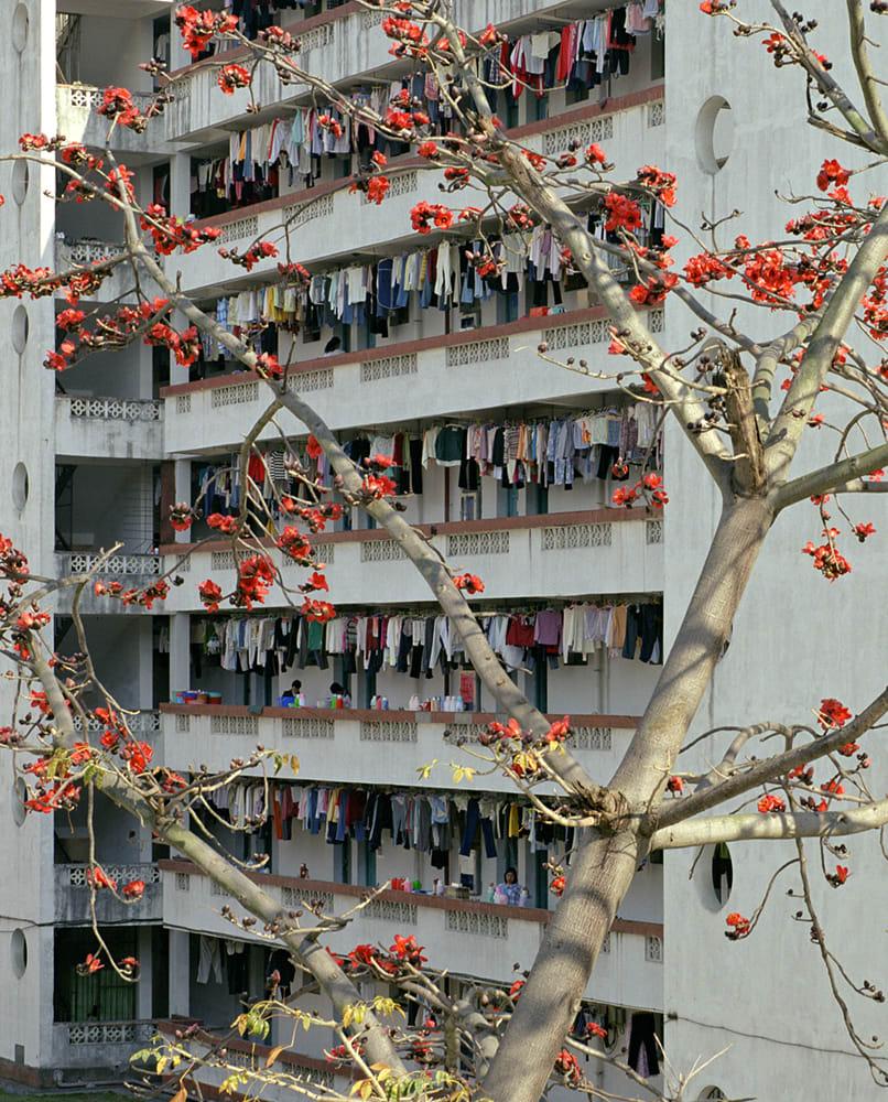 Gerald van der Kaap, Xiada (Fruit Tree), Xiamen, 2002