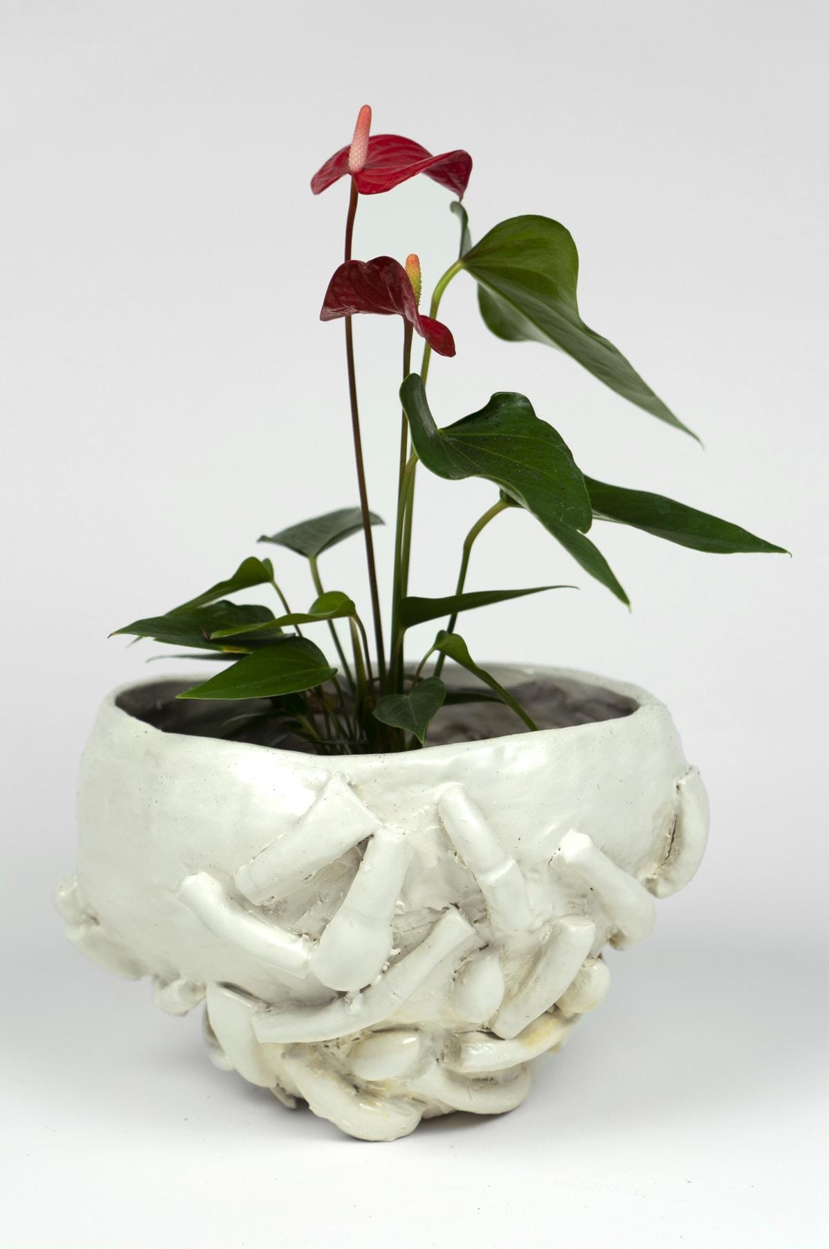 Ilana Harris-Babou, Plant 1, 2020