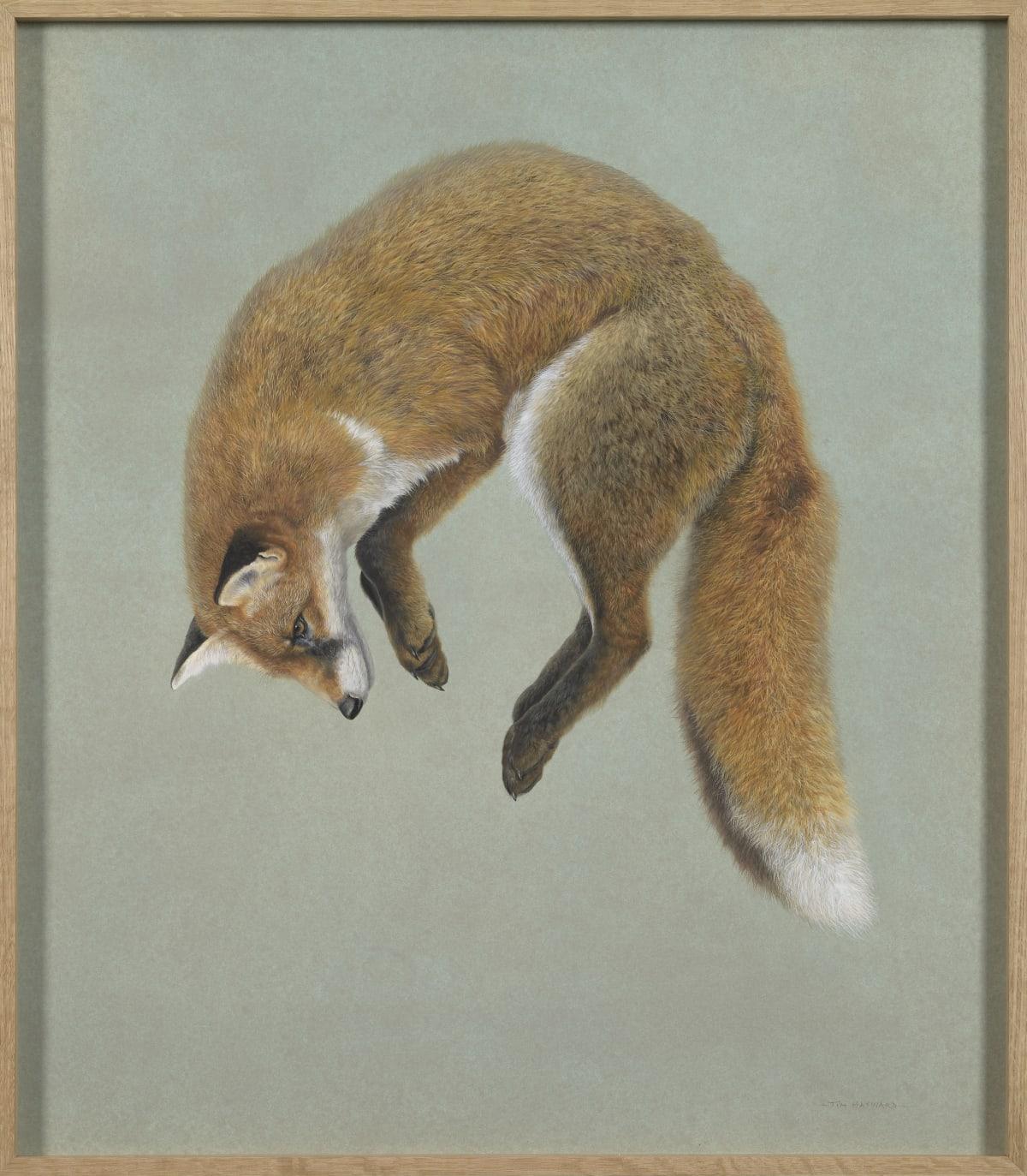 Fox pounce, 2021