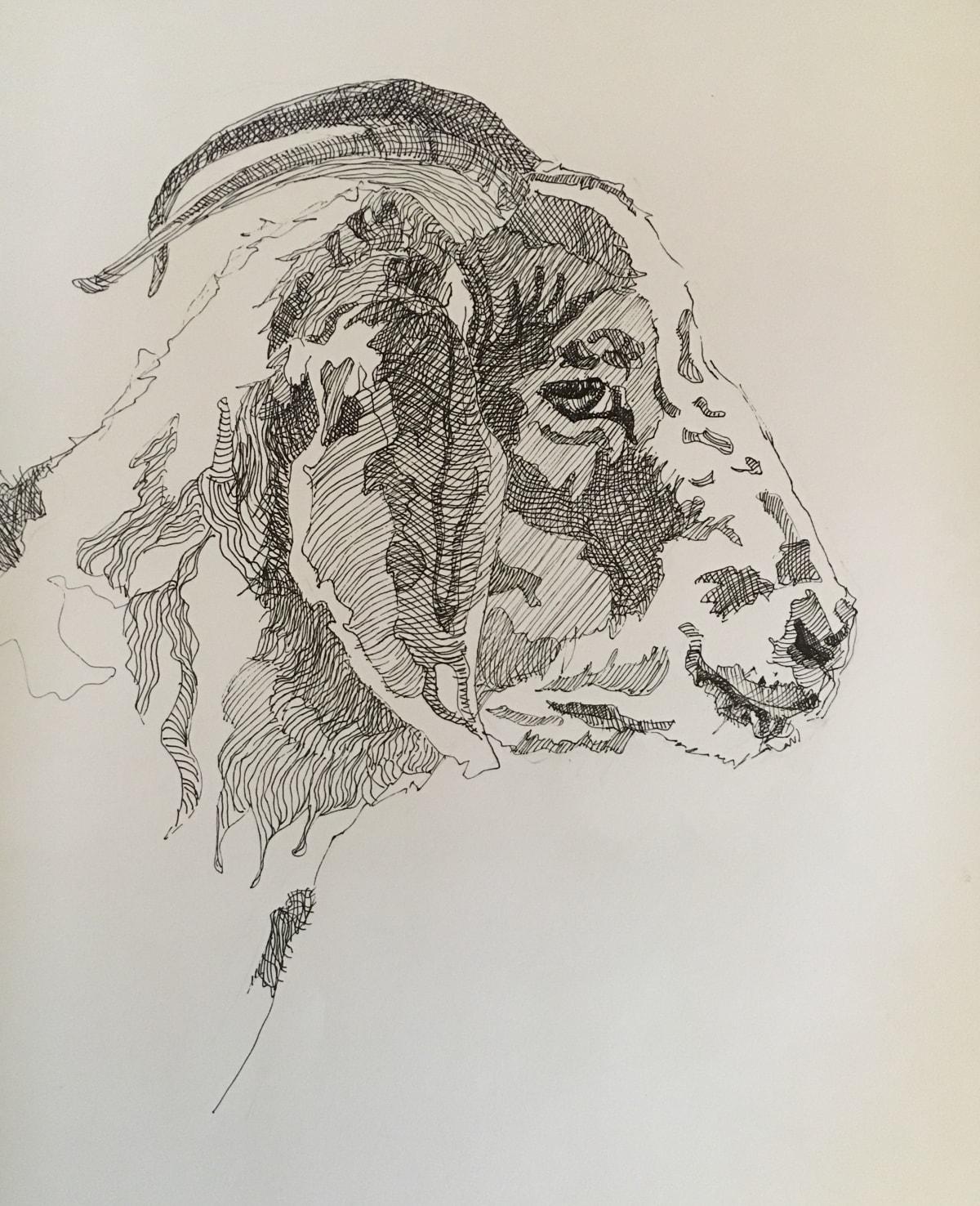 Vivien Budge , Transkei goat, 2018