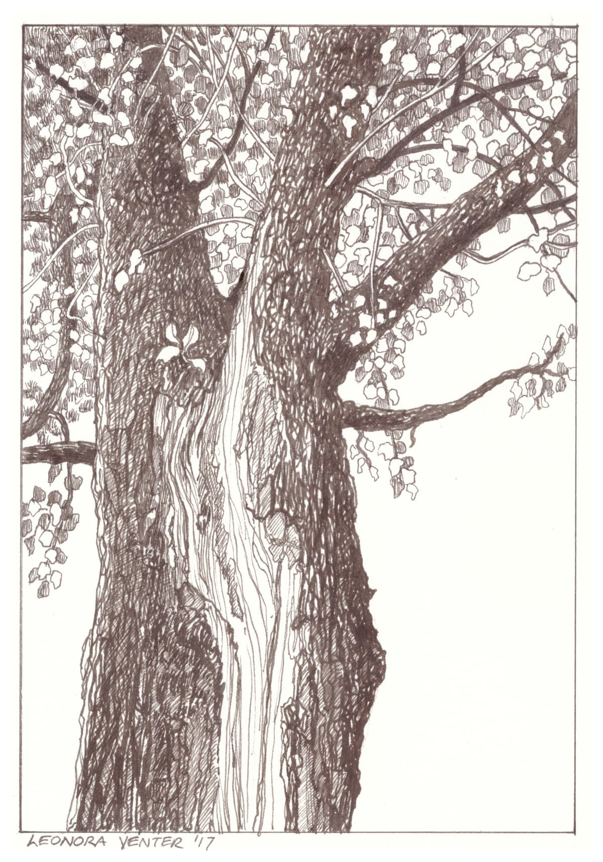 Leonora Venter, Tree, 2017