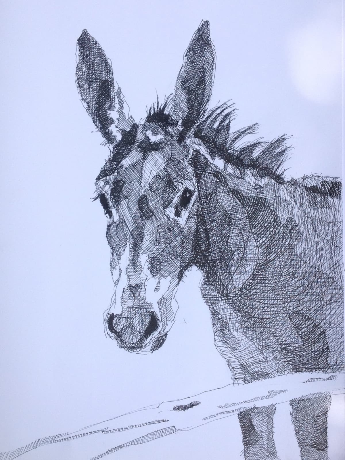 Vivien Budge , Wimpy's donkey, 2018