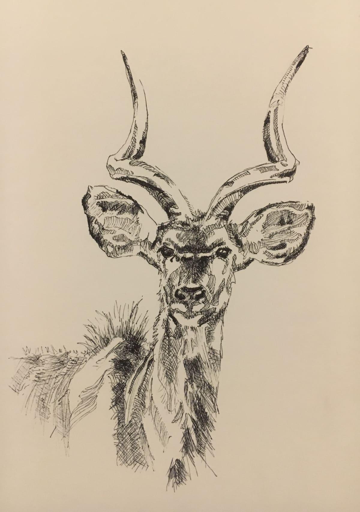 Vivien Budge, Young kudu male, 2018