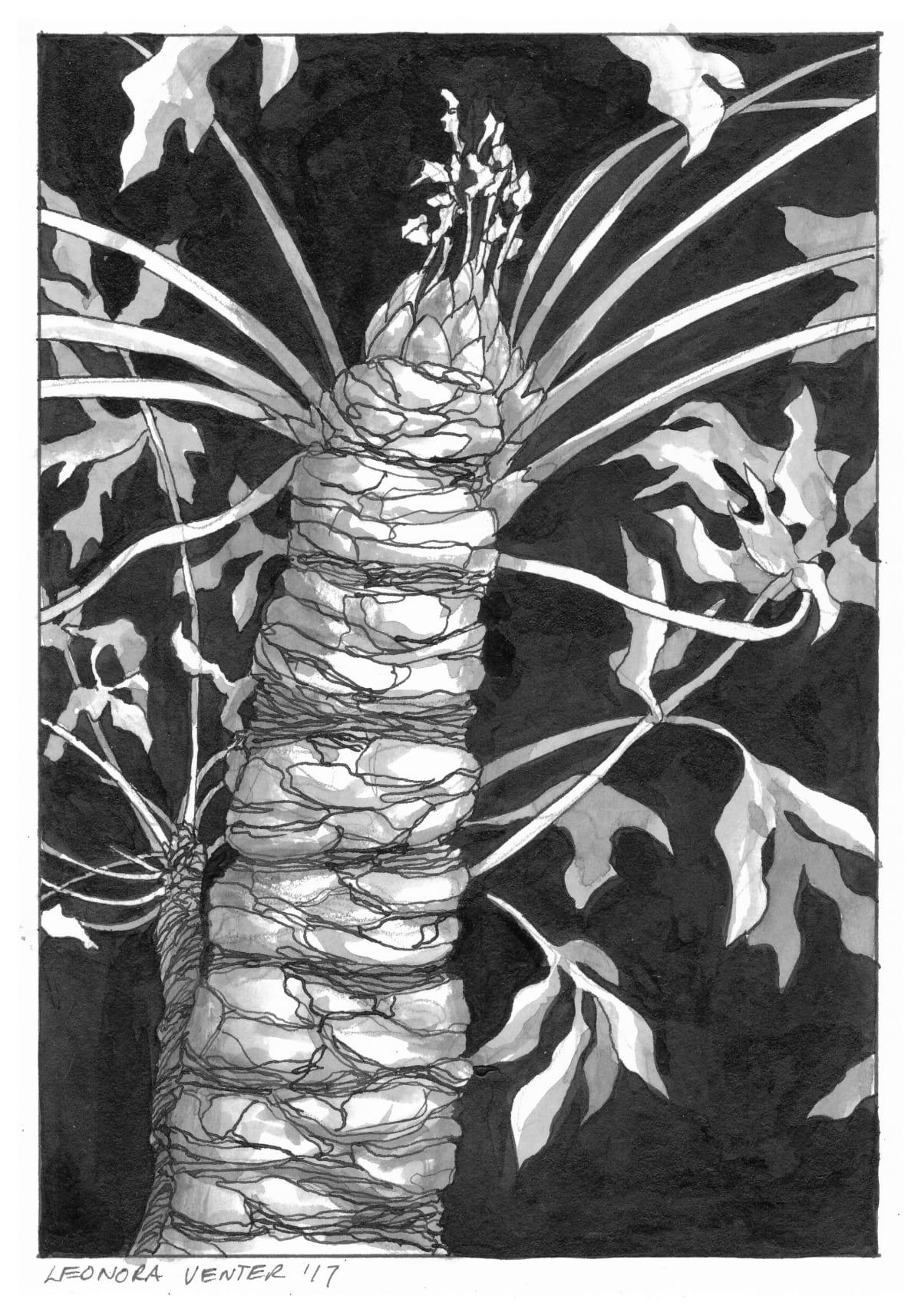 Leonora Venter, Cabbage Tree (Cussonia), 2017