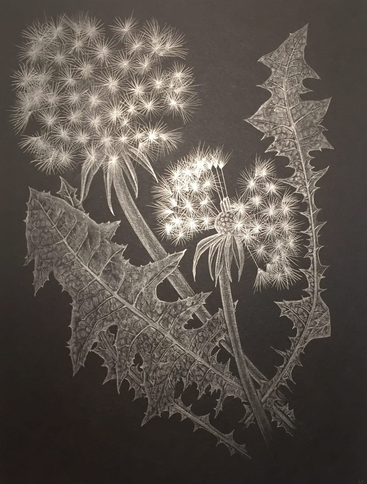 Margot Glass, Two Dandelions, 2018