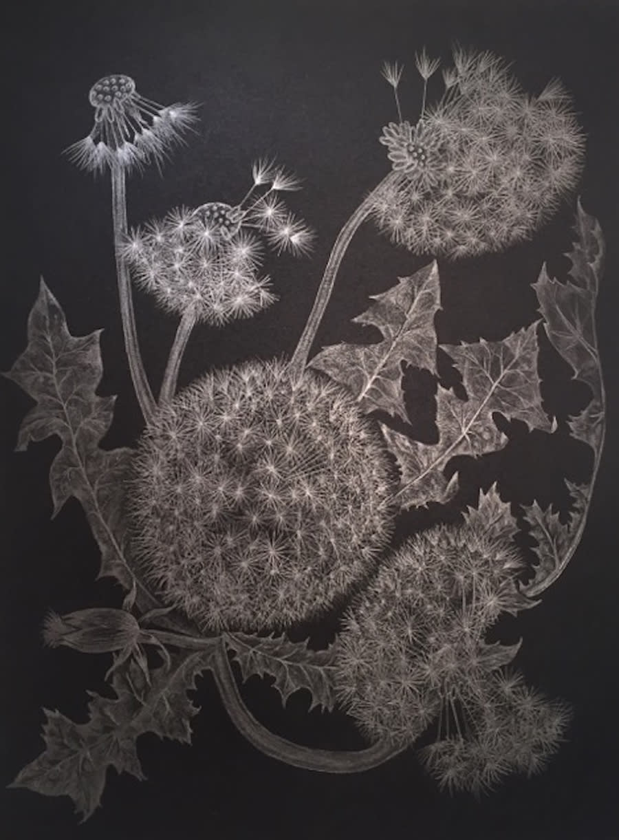 Margot Glass, Five Dandelions, 2018