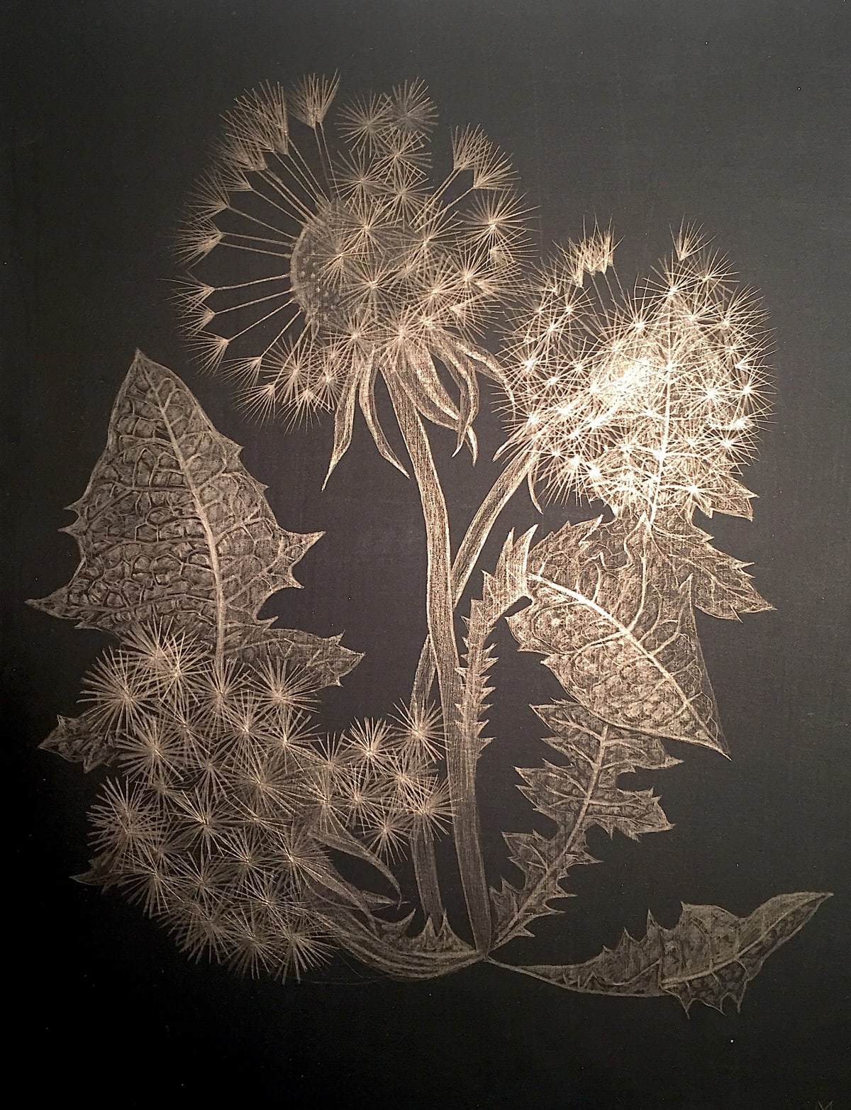 Margot Glass, Dandelion , 2018