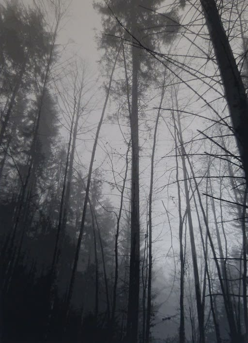 SONJA WEBER Woodland 1745, 2018 jacquard 180 x 130cm signed and dated