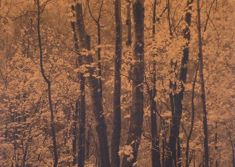 SONJA WEBER Woodland 1806, 2019 jacquard 125 x 175cm signed and dated