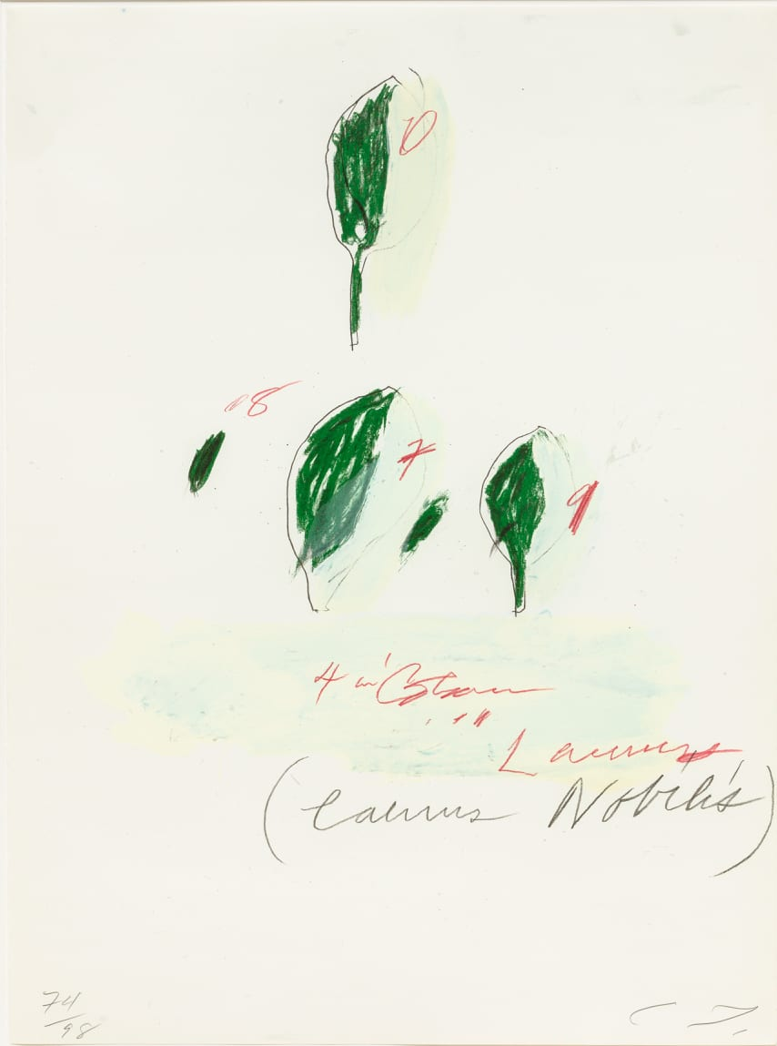 Cy Twombly Natural History II, Some Trees of Italy (H), 1975-76 Portfolio of eight prints. Mixed media technique: Lithograph, grano-lithograph, collotype on Fabriano paper Each sheet: 76 x 56.5 cm Frame: 87 x 67 x 4.2 cm Edition of 98 + 17 AP + 1 PP + 1 SP