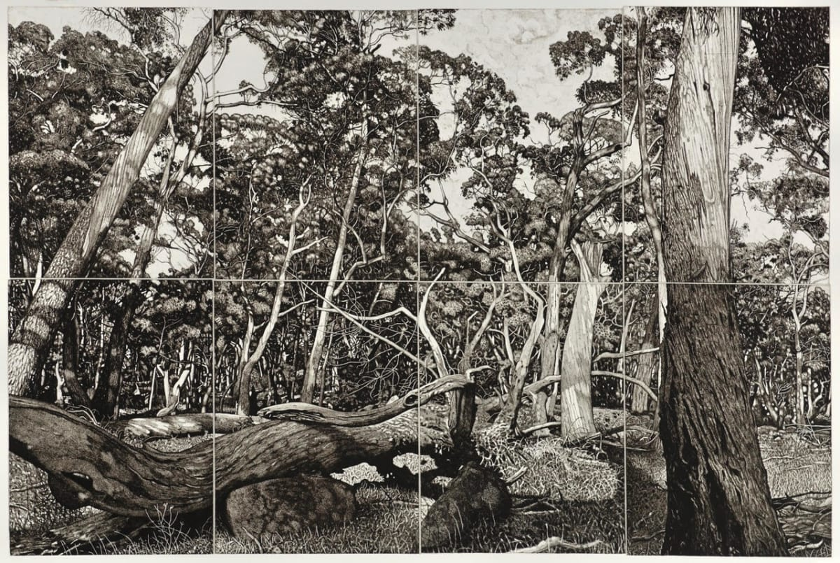 David Frazer The Tangled Wood, 2018 etching 80 x 120cm Edition of 25