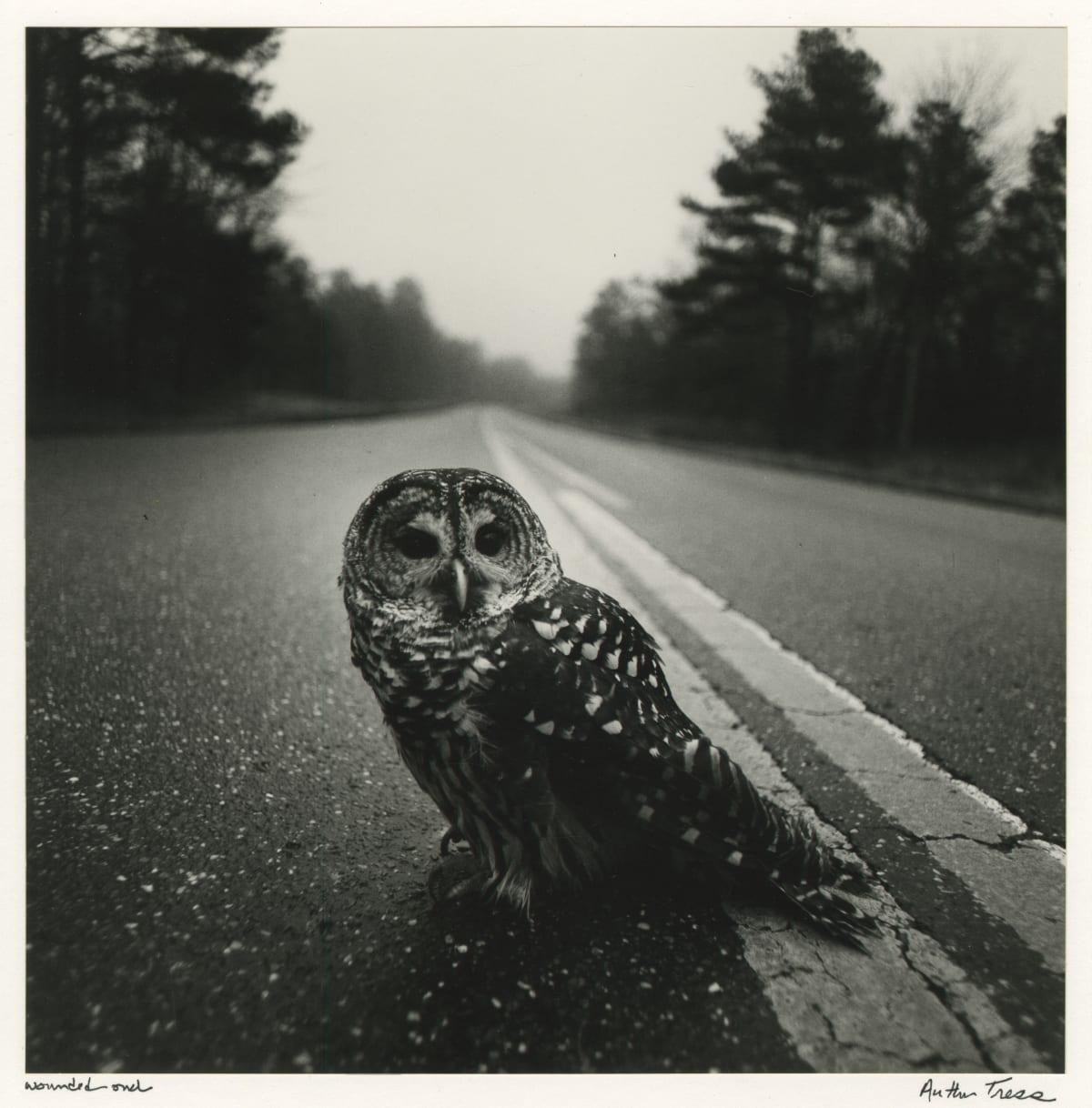 Arthur Tress, Wounded Owl, 1975