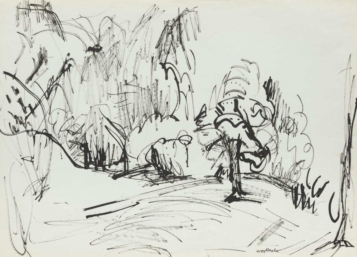 Mountford Tosswill Woollaston Trees Near Nelson, 1960 ink on paper 275mm x 375mm