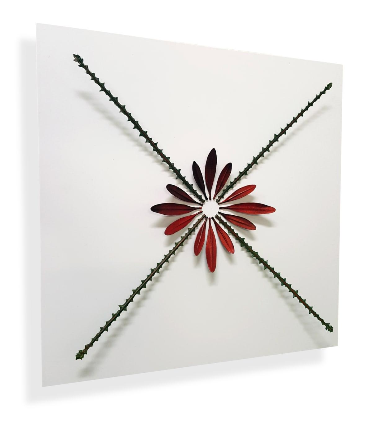 Elizabeth THOMSON  Casa Pintoresca Study III, 2015-16  Mixed media  17.7 x 17.7 in 45 x 45 cm