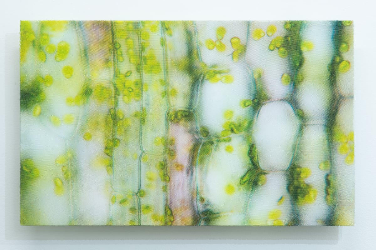 Elizabeth THOMSON My Titirangi Years – Bamboo Curtain, 2018 glass spheres, optically clear epoxy resin, aqueous isolation, cast vinyl film, lacquer on contoured and shaped wood panel 38 x 61.5 x 4 cm 15 x 24 1/4 x 1 5/8 in