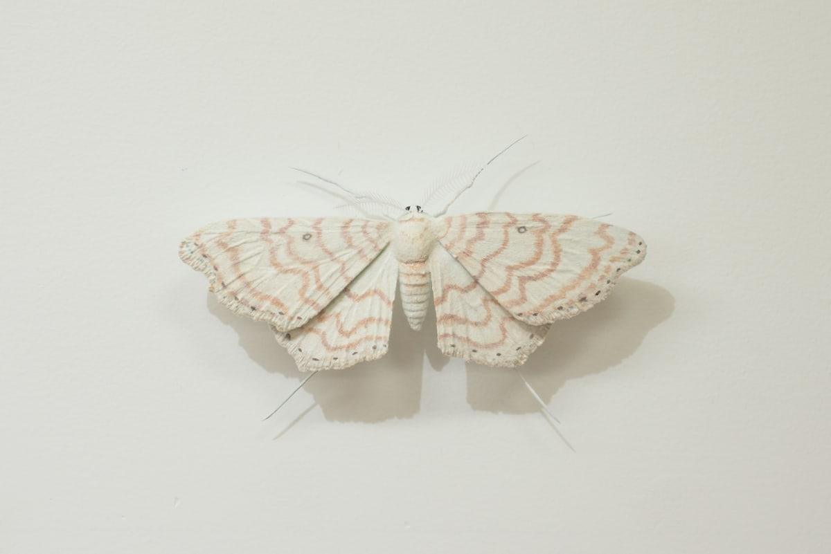 Elizabeth THOMSON, Moth [G], ND