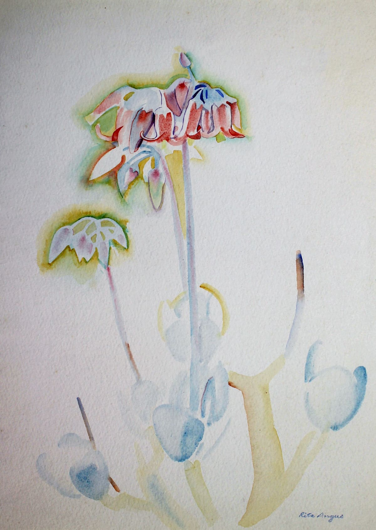 Rita Angus Flower Study (Waikanae), 1951-52 Watercolour on paper 15 x 9.9 in 38 x 25.2 cm