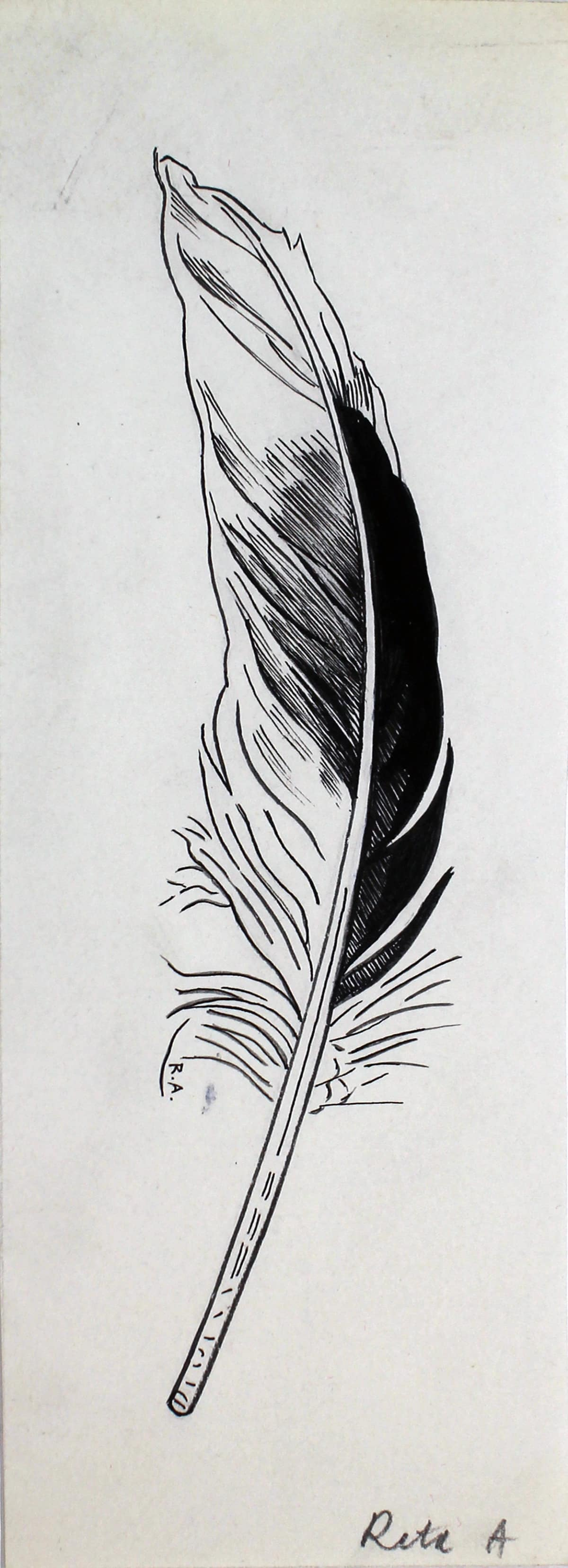 Rita Angus Untitled [Feather], 1950s Ink on paper 7.5 x 1.8 in 19 x 4.5 cm