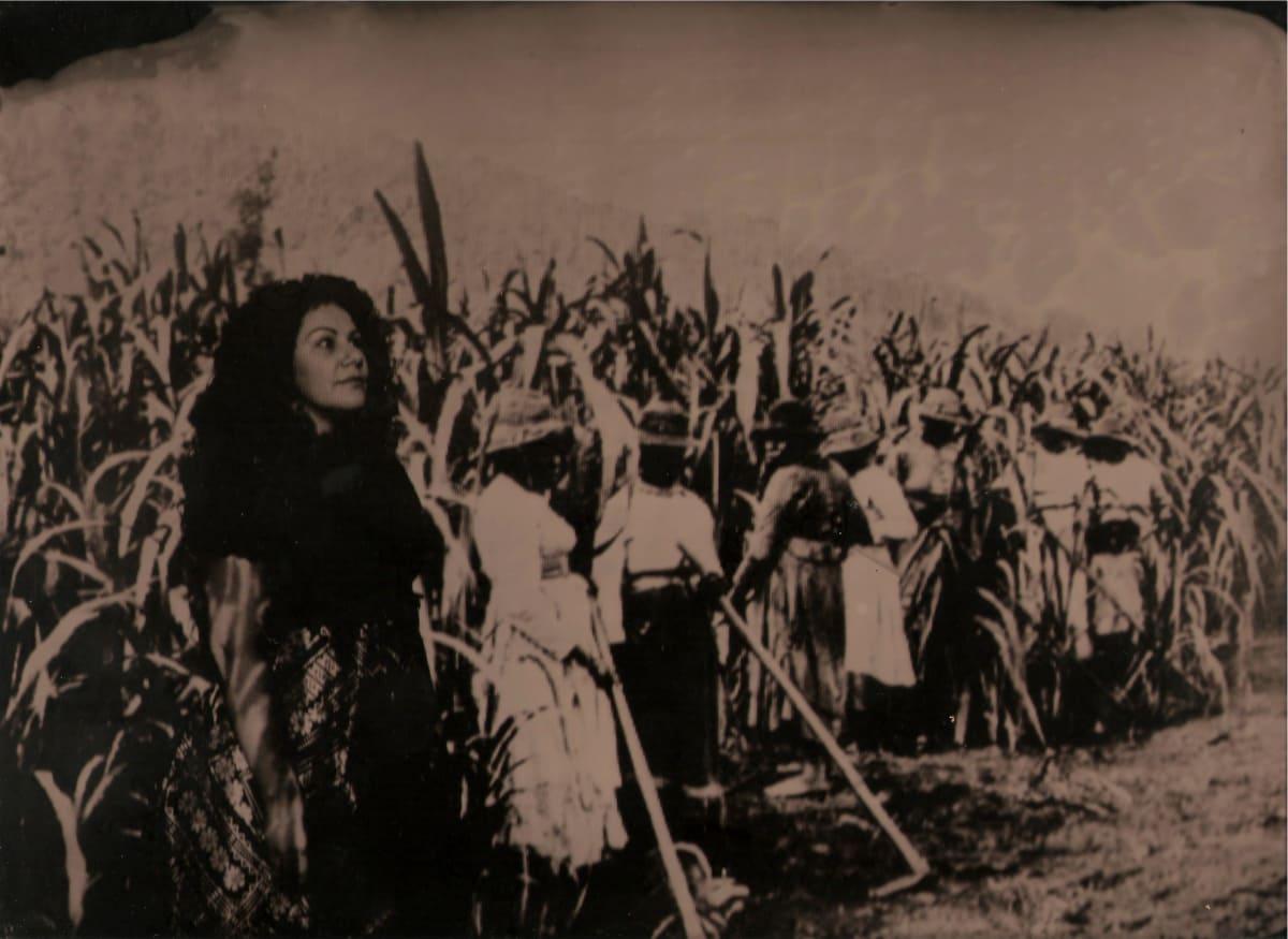 Jasmine Togo-Brisby, Kanaka women in the sugar cane: Hambledon plantation, 2017
