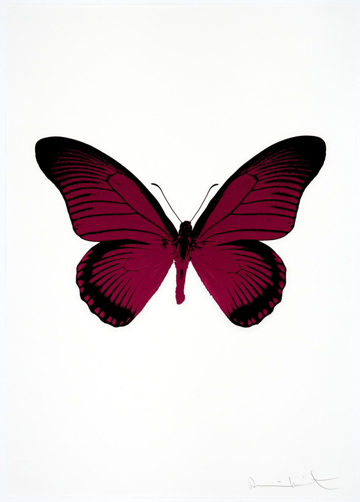 Damien Hirst The Souls IV - Fuchsia Pink/Raven Black Damien Hirst butterfly foil print for sale Damien Hirst print for sale , 2010 2 colour foil block on 300gsm Arches 88 archival paper. Signed and numbered. Published by Paul Stolper and Other Criteria 72 x 51cm OC7986 / 1418-9 Edition of 15