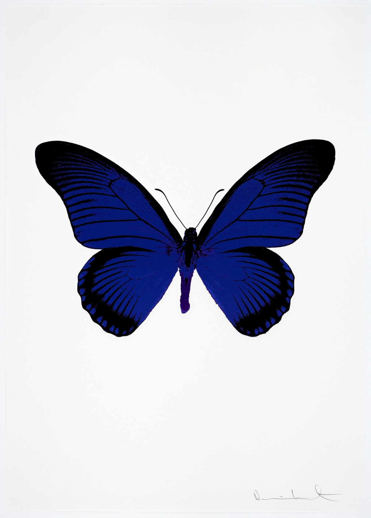 Damien Hirst The Souls IV - Westminster Blue/Raven Black/Imperial Purple Damien Hirst butterfly foil print for sale Damien Hirst print for sale , 2010 3 colour foil block on 300gsm Arches 88 archival paper. Signed and numbered. Published by Paul Stolper and Other Criteria 72 x 51cm OC8024 /1418-47 Edition of 15