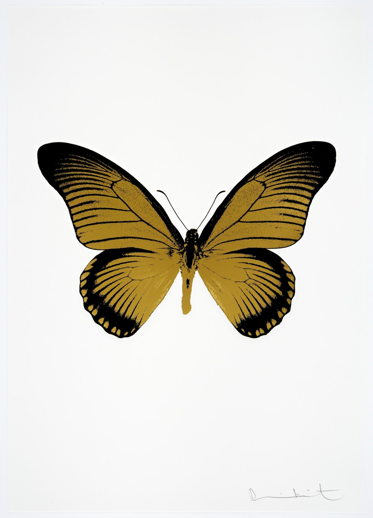 Damien Hirst The Souls IV - Oriental Gold/Raven Black Damien Hirst butterfly foil print for sale Damien Hirst print for sale , 2010 2 colour foil block on 300gsm Arches 88 archival paper. Signed and numbered. Published by Paul Stolper and Other Criteria 72 x 51cm OC8012 / 1418-35 Edition of 15