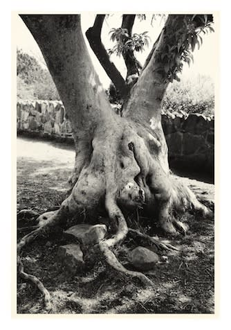 Julian Simmons TITTIPUSSIDAD TREE, 2014 Inkjet print on Velin BFK Rives, 100% cotton rag 280gsm. Signed, numbered and dated on verso. Sheet size: 112.5 x 76.5 cm Edition of 6