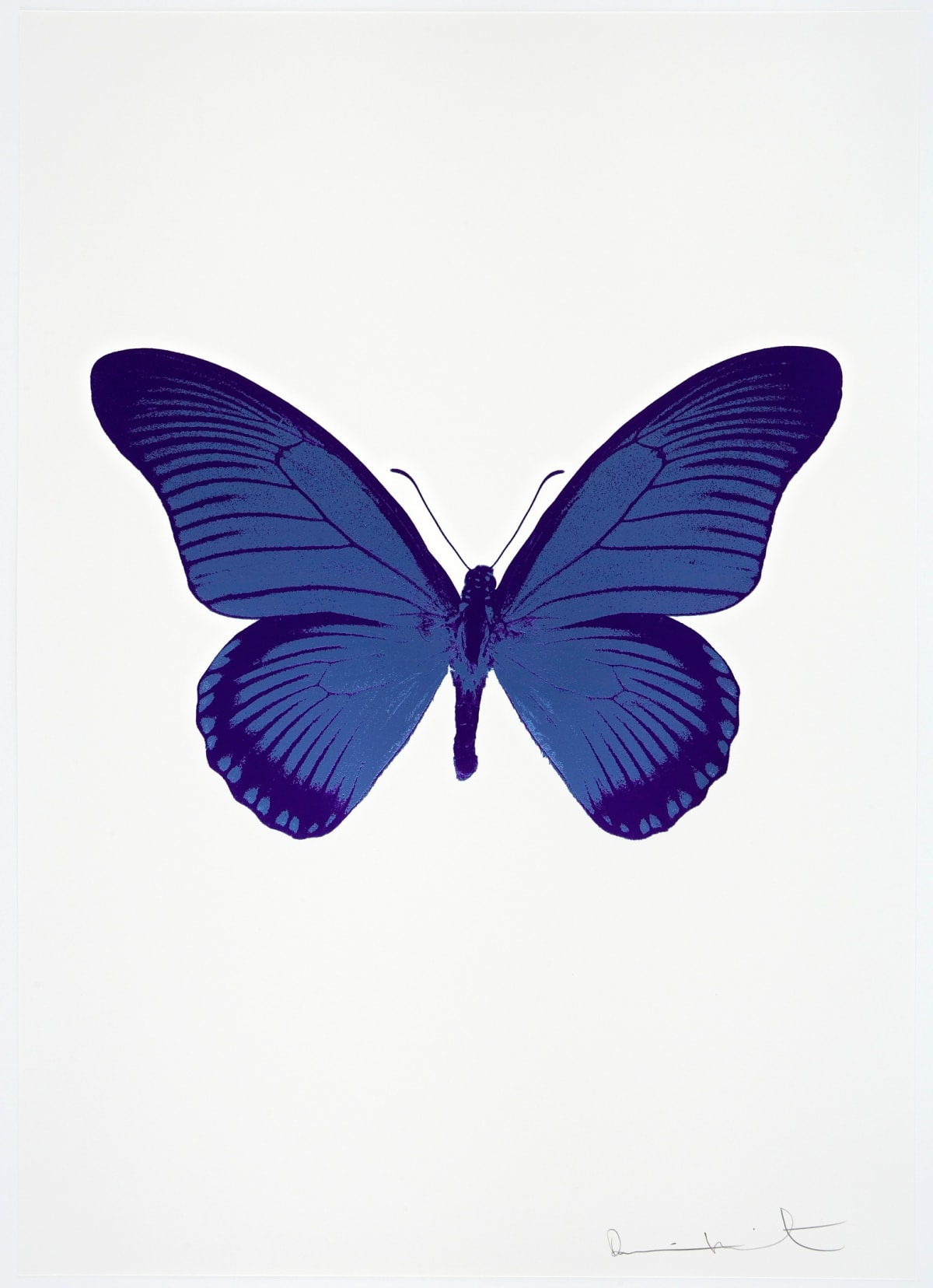 Damien Hirst The Souls IV - Frost Blue/Imperial Purple/Imperial Purple Damien Hirst butterfly foil print for sale Damien Hirst print for sale , 2010 3 colour foil block on 300gsm Arches 88 archival paper. Signed and numbered. Published by Paul Stolper and Other Criteria 72 x 51cm OC8027 / 1418-50 Edition of 15