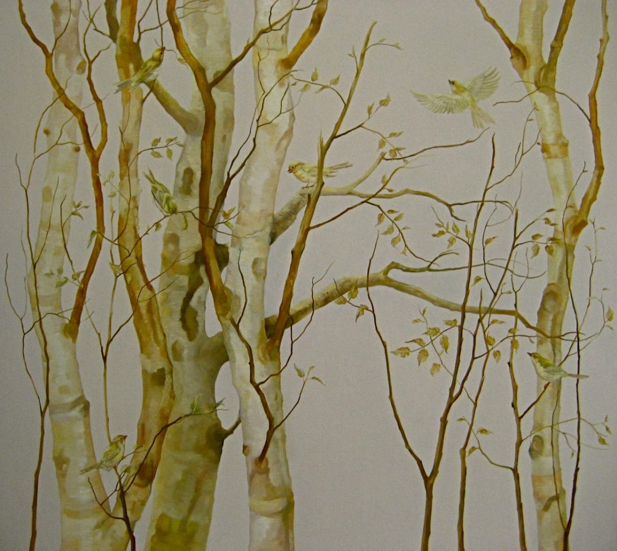 Grace O'Connor Yellow Birch, 2009 Oil on Linen 92 x 102cm 36.2 x 40.2