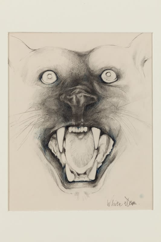 """John Dove and Molly White Panther Head (from the Series """"Animal Heads"""", 1968 Pencil drawing on Daler Drawing Cartridge. Signed in pencil. Framed with Black painted Aluminium, window mounted with archival board (Spanish white) with museum UV glass 24 x 24 cm. 9.4 x 9.4 in"""