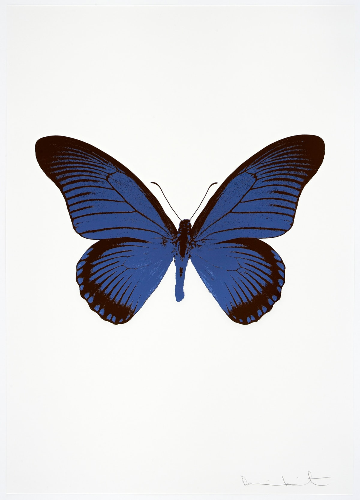Damien Hirst The Souls IV - Frost Blue/Chocolate Damien Hirst butterfly foil print for sale Damien Hirst print for sale , 2010 2 colour foil block on 300gsm Arches 88 archival paper. Signed and numbered. Published by Paul Stolper and Other Criteria 72 x 51cm OC7997 / 1418-20 Edition of 15