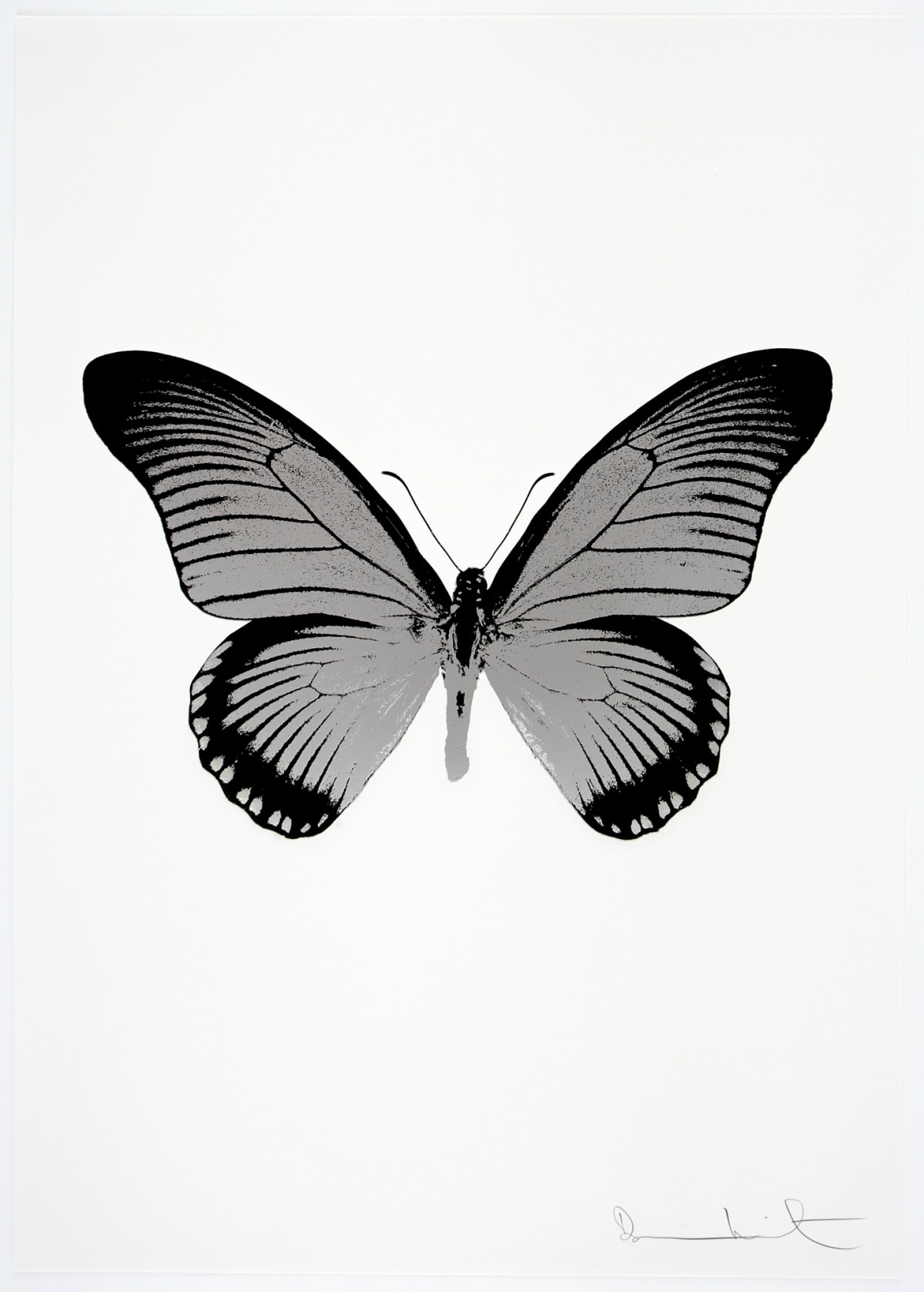 Damien Hirst The Souls IV - Silver Gloss/Raven Black Damien Hirst butterfly foil print for sale Damien Hirst print for sale , 2010 2 colour foil block on 300gsm Arches 88 archival paper. Signed and numbered. Published by Paul Stolper and Other Criteria 72 x 51cm OC7999 / 1418-22 Edition of 15
