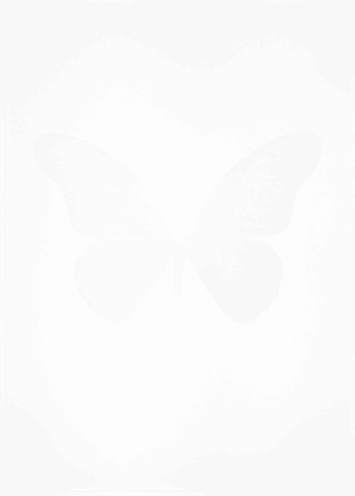 Damien Hirst The Souls IV - Cotton White/Cotton White/Cotton White Damien Hirst butterfly foil print for sale Damien Hirst print for sale , 2010 1 colour foil block on 300gsm Arches 88 archival paper. Signed and numbered. Published by Paul Stolper and Other Criteria 72 x 51cm OC8047 /1418-70 Edition of 15