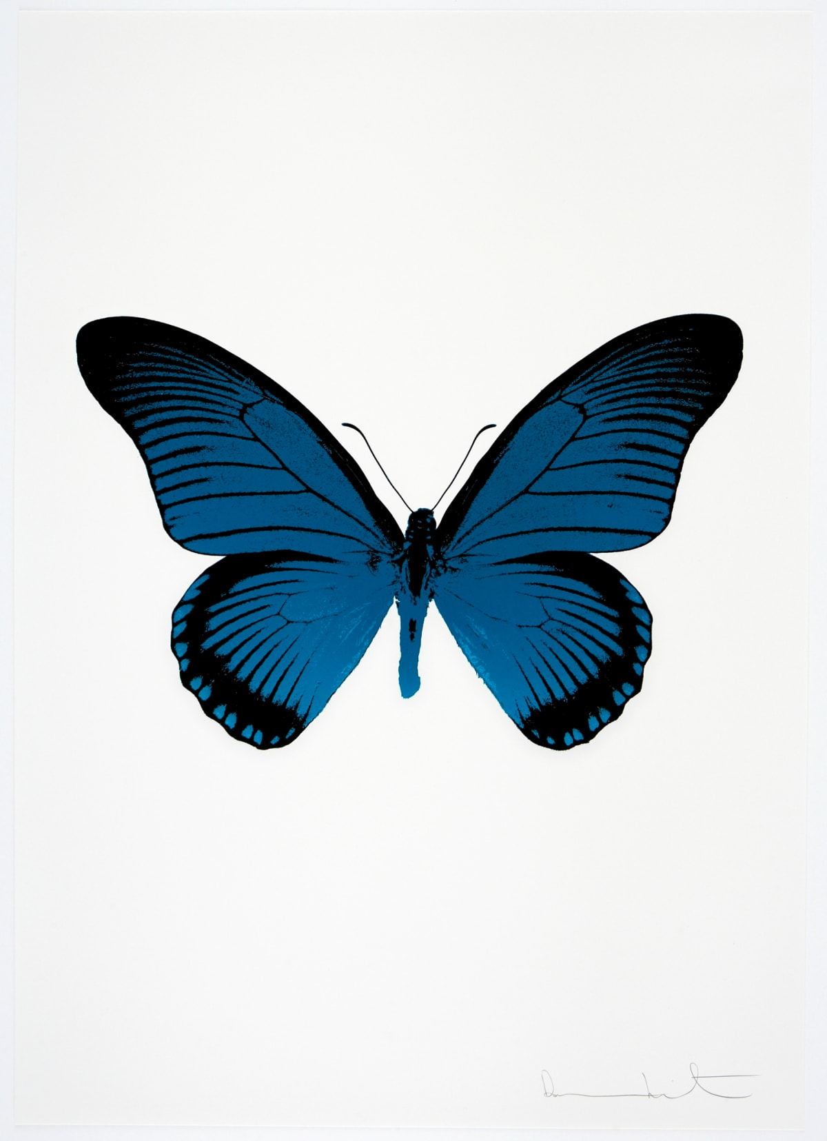 Damien Hirst The Souls IV - Turquoise/Raven Black Damien Hirst butterfly foil print for sale Damien Hirst print for sale , 2010 2 colour foil block on 300gsm Arches 88 archival paper. Signed and numbered. Published by Paul Stolper and Other Criteria 72 x 51cm OC7978 / 1418-1 Edition of 15