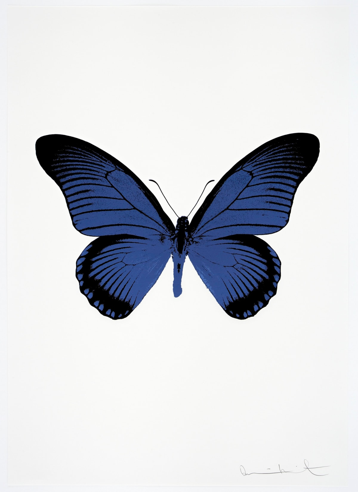 Damien Hirst The Souls IV - Frost Blue/Raven Black Damien Hirst butterfly foil print for sale Damien Hirst print for sale , 2010 2 colour foil block on 300gsm Arches 88 archival paper. Signed and numbered. Published by Paul Stolper and Other Criteria 72 x 51cm OC7982 /1418-5 Edition of 15