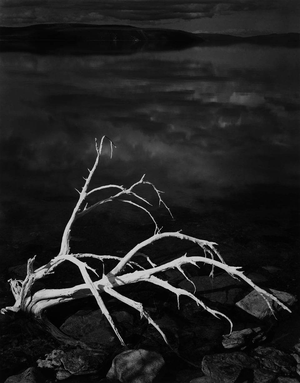Ansel Adams White Branches, Mono Lake, California, 1950 Gelatin Silver Print Image Dimensions: 15 x 19 inches Matted Dimensions: 24 x 30 inches © Ansel Adams. Courtesy of the Ansel Adams Publishing Trust