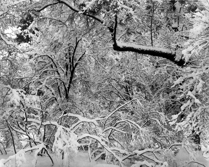 Ansel Adams Fresh Snow, Yosemite Valley, California, 1947, printed 1974 Gelatin Silver Print Mount 22 3/4 x 29 inches; Image 15 1/2 x 19 inches © Ansel Adams. Courtesy of the Ansel Adams Publishing Trust Edition 79 of 110