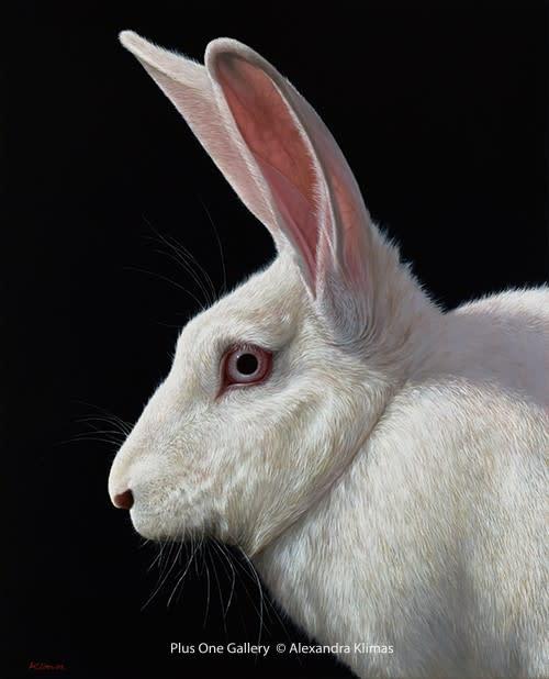 Alexandra Klimas Snowy the Rabbit I Oil on canvas 100 x 80 cm