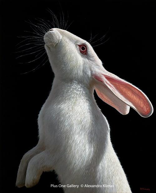 Alexandra Klimas Snowy the Rabbit II Oil on canvas, 100 x 80 cm