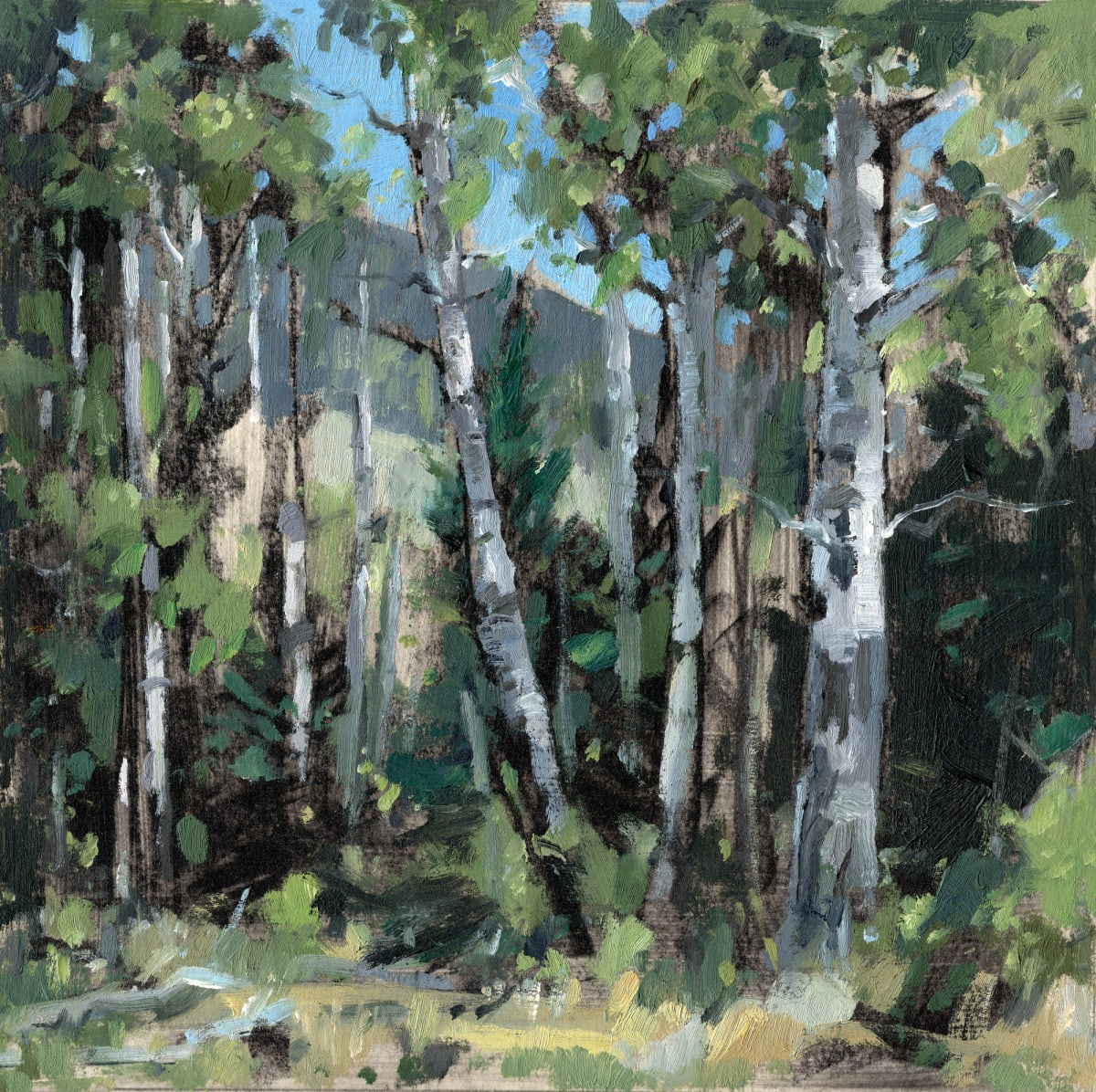 Jared Shear, Aspens On The Bob, 2018
