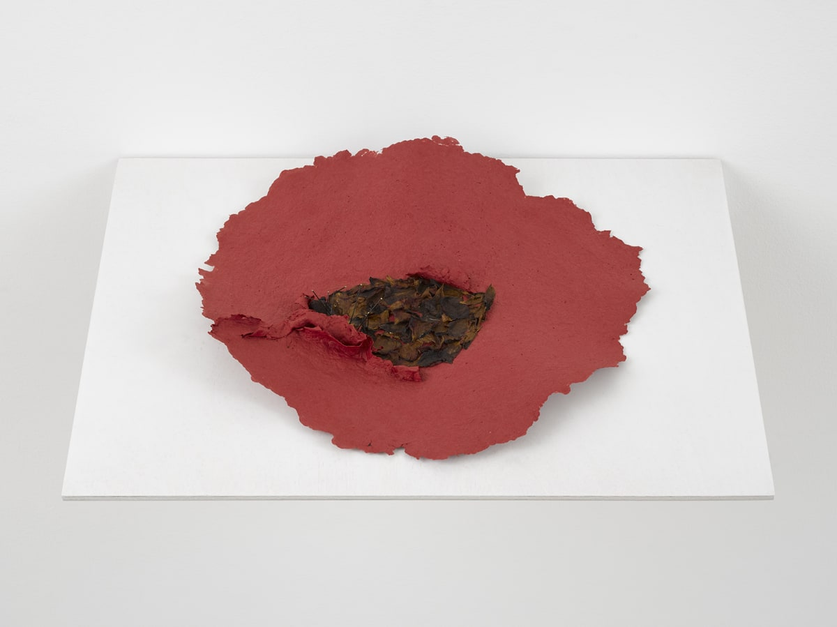 Lili DUJOURIE Ballade - Rosa Canina, 2011 Papier-mâché 38 x 36 x 3.5 cm